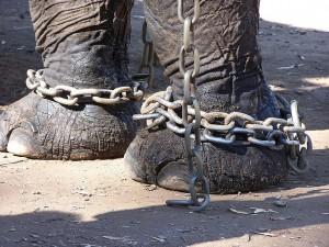 Storie Motivazionali - Elefante incatenato - UYM