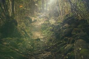 Poesie di crescita personale - Sentiero - UYM