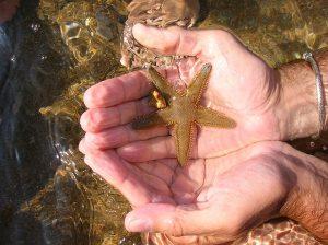 Racconti brevi per l'anima e la mente - Stella marina - uym