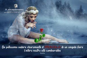 Immagini motivanti per riflettere - Il miracolo di un fiore - uym