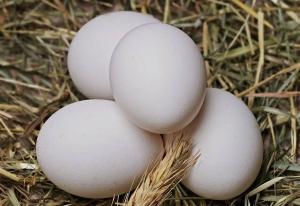 Problemi senza soluzione e le premesse implicite - Uovo di Colombo - uym
