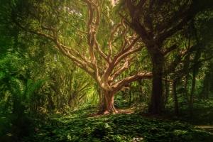 5 favole motivazionali - L'albero triste - uym