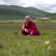 Il segreto dell'uomo più felice del mondo - Matthieu Ricard - uym