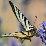 Effetto Farfalla - UYM