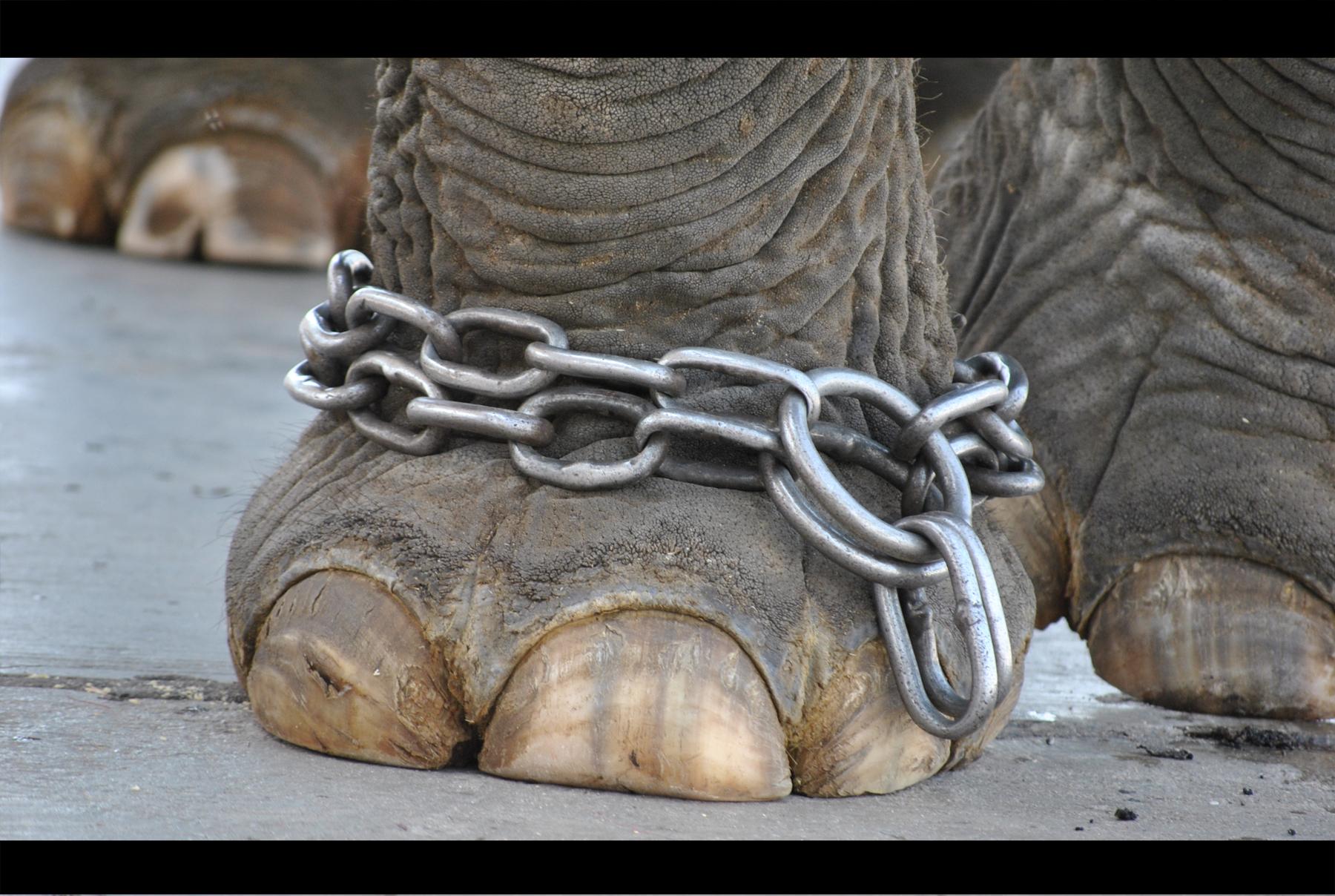 Storie motivazionali - l'elefante - UYM