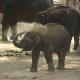 Storie su cui riflettere l'elefante incatenato - uym