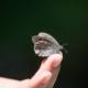 Effetto farfalla - cos'è - uym
